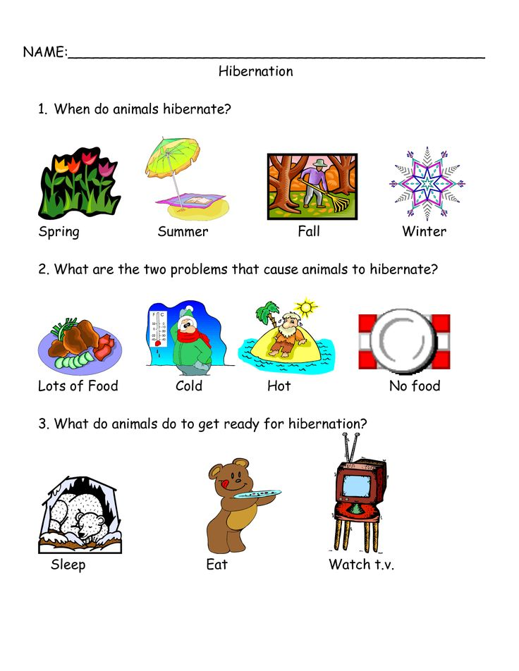 Worksheets On Bear Hibernation Google Search Bear