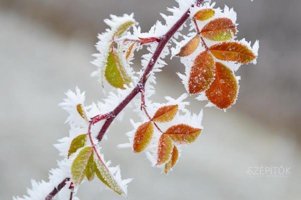 Fehérbe öltöztetett természet. Zúzmarás újévi táj Budapesten