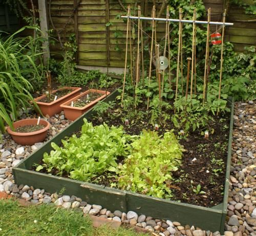 very small veg patch - Google Search