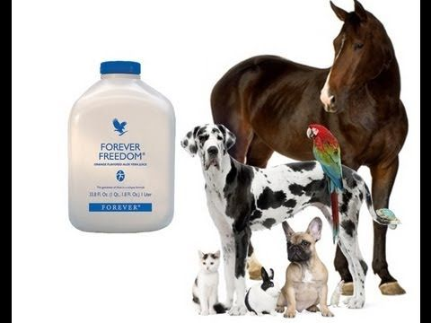 ▶ Forever Freedom Aloe Vera Juice for Animals Reviews, Testimonies - YouTube https://www.foreverliving.com/retail/entry/Shop.do?distribID=440500014023&store=GBR Or Call: 079 4961 7064