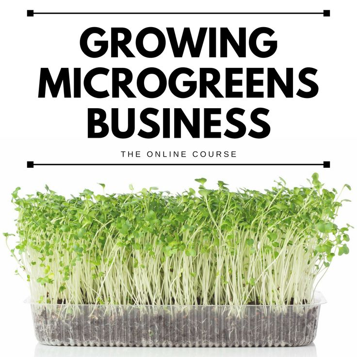 Starting and Growing A Microgreens Business Online Course