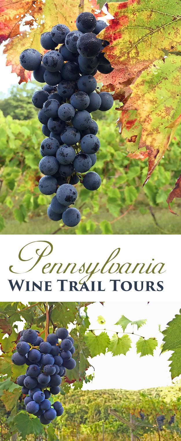 Take a wine tour in the Poconos. A Pocono Wine Trail tour is a great way to enjoy locally made wine. Drink local at all of the best wineries in the Pocono Mountains. It's one of the most fun things to do in the Poconos. Close to Stroudsburg, Tannersville, Mount Pocono, and Jim Thorpe!