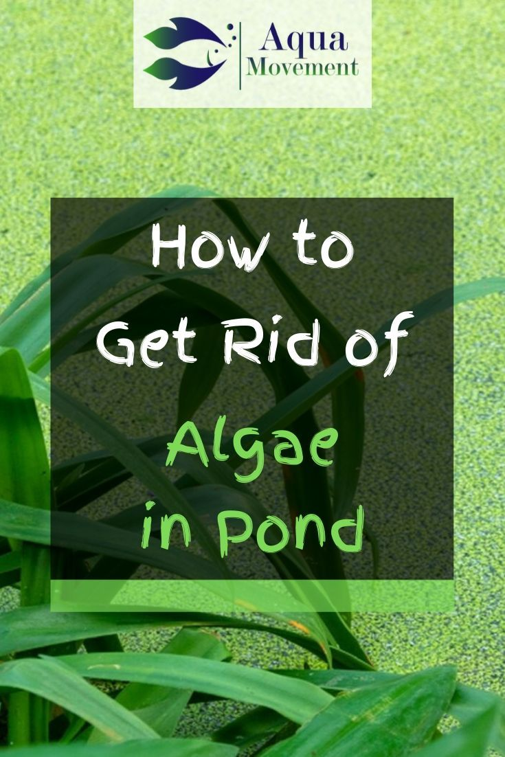 how to get rid of string algae in fish tank