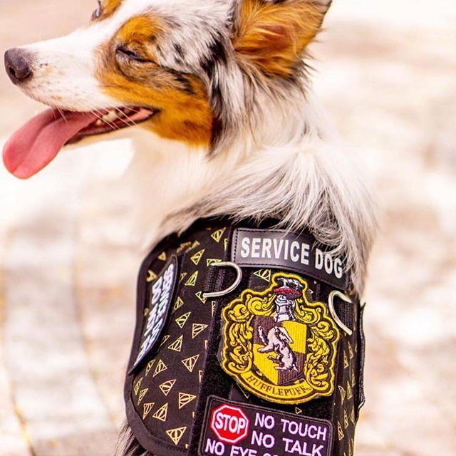 Harry Potter Themed Service Dog Vest By The Atomic Hound We