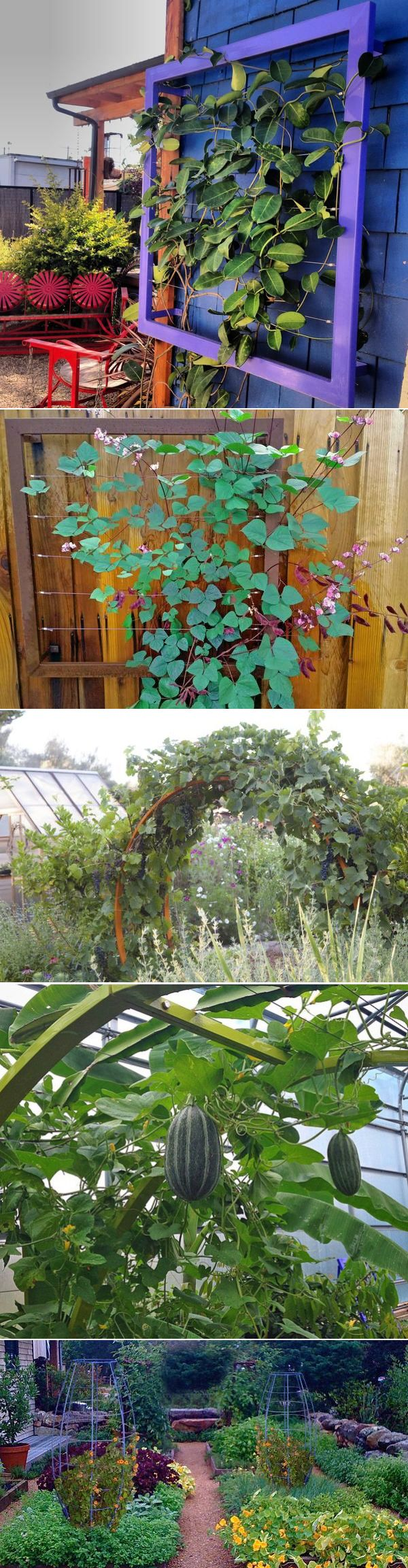 Best 217 Modern Trellis images on Pinterest | Gardening