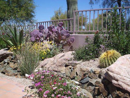 44 best desert scape ideas images on pinterest for Dry scape landscaping