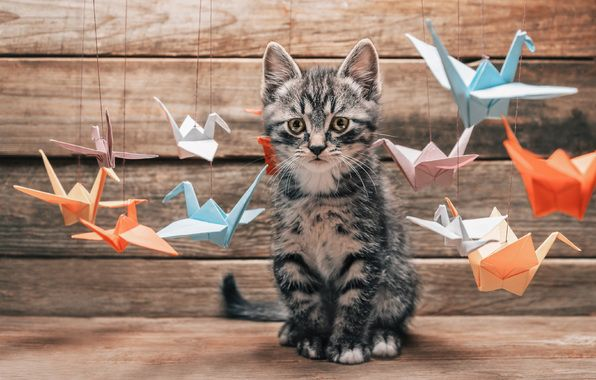 Wallpaper cat, cat, whiskers, paws, tail, surprise, interest, choice, colorful