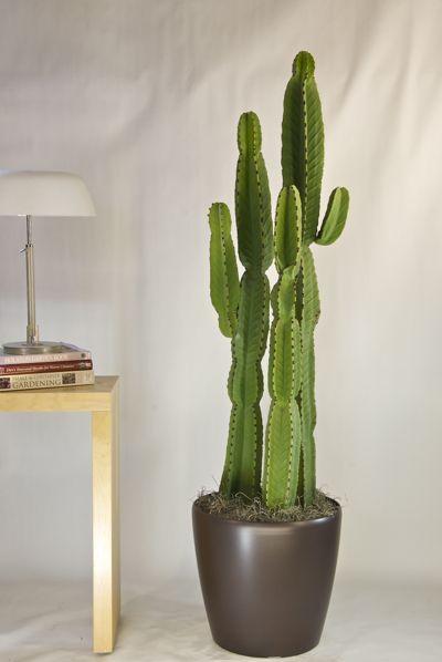 candelabra cactus? (but shorter for my house) others: fairy castle - cereus tetragonus; beaver tail cactus; bunny ears - opuntia microdasys