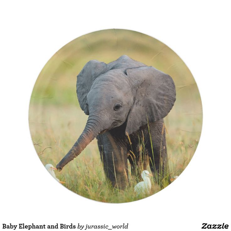 Baby Elephant and Birds Paper Plate | Zazzle.comCustom Kitchen and Food