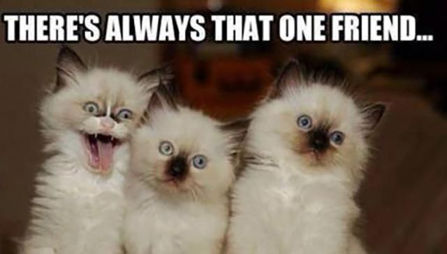Funny Friendship Memes to Brighten Your Day: That One Friend Meme