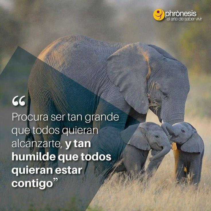 La humildad #autoayuda