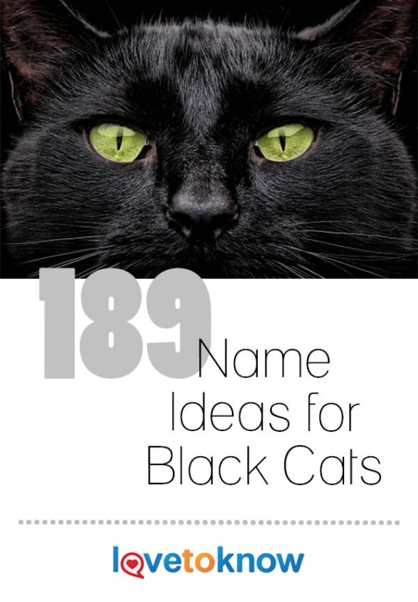 There are quite a few names which are especially suitable for black cats. Some are traditional while others may strike you as silly, but chances are these names have already been used by someone, somewhere. If nothing else, you should be able to draw inspiration from these lists to create an original name for your pet. | 189 Name Ideas for Black Cats from #LoveToKnow