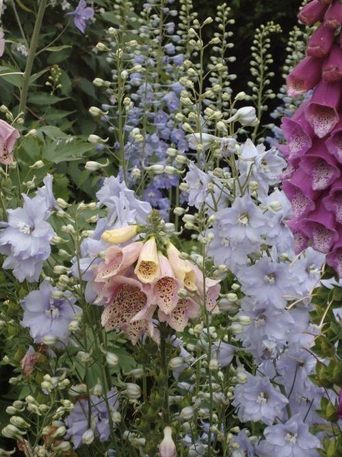 English garden by Gmomma