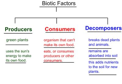 How do decomposers factor into the food chain???