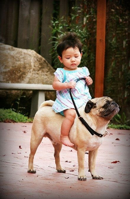 Get out of here with your combination Asian and pug cuteness.