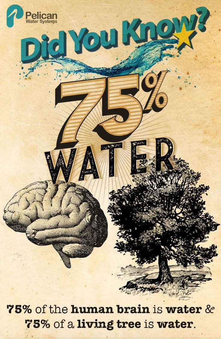 Your Brain Is 75 Water So Is A Living Tree Waterfacts