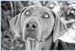 Adopt a Pet | Sandton SPCA