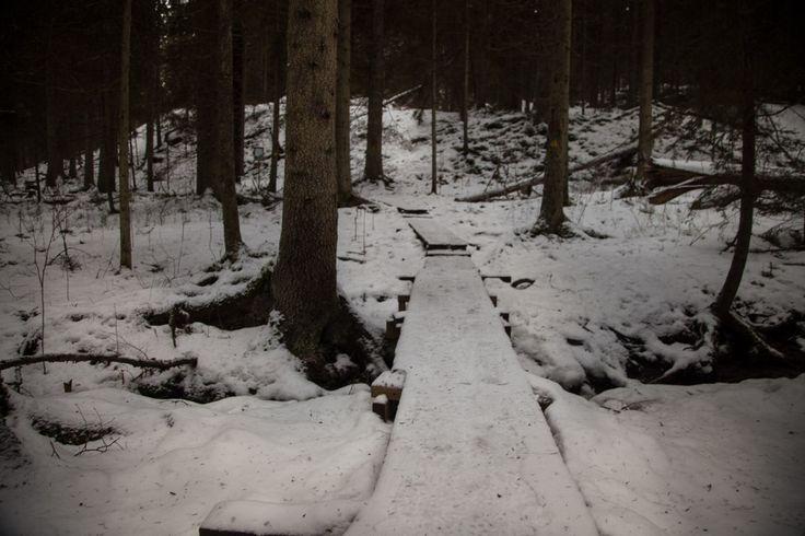 Snowy forest #visitsouthcoastfinland #Lohja #Finland #karnaistenkorpi #snow #winter