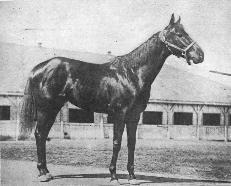 Black Gold-1924