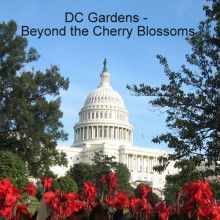 DC Gardens - Beyond the Cherry Blossoms | Indiegogo