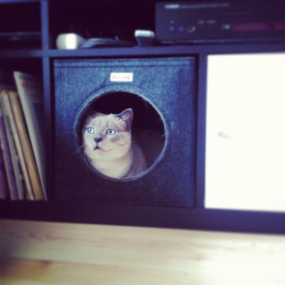 Grotte de chat se sentait parfaitement pour IKEA Expedit et Kallax.  Ce chat lit une étagère dans une grande retraite pour votre chat.  La grotte de