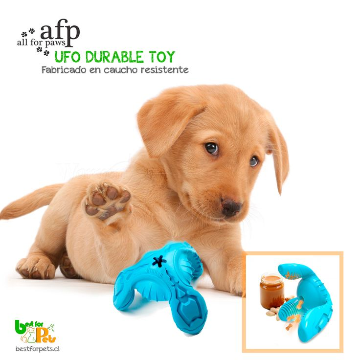 Nuevos juguetes All for Paws para sus peludos!!! Consíguelos en Best for Pets