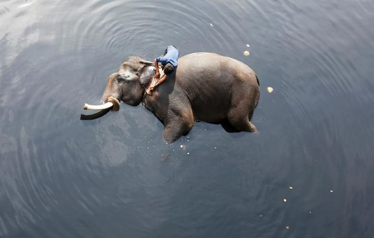 A mahout bathes his elephant in the polluted water of river Yamuna in New Delhi, India.       REUTERS/Adnan Abidi