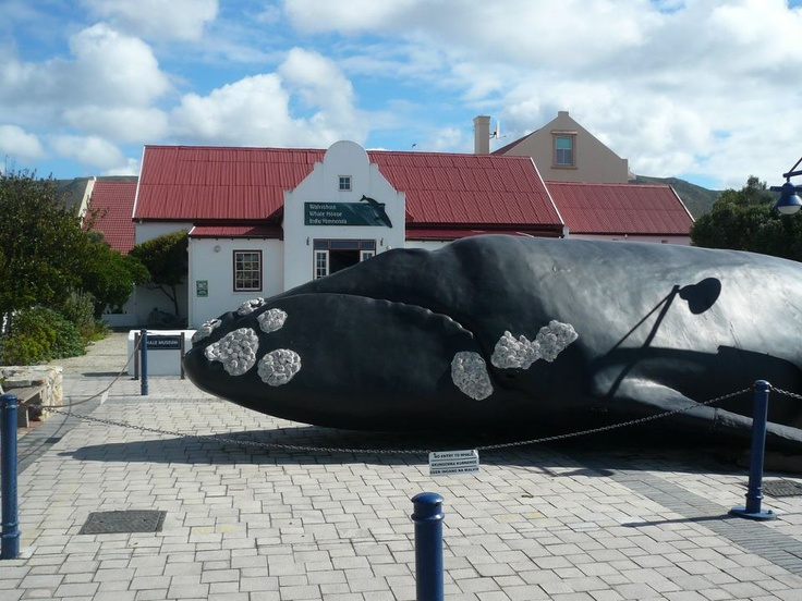 The Whale Coast provides a Tourism Office onsite where you can get the latest weather updates in Hermanus, find your way around the local wine estates, get assistance with forward bookings or find details on local entertainment and festivals.