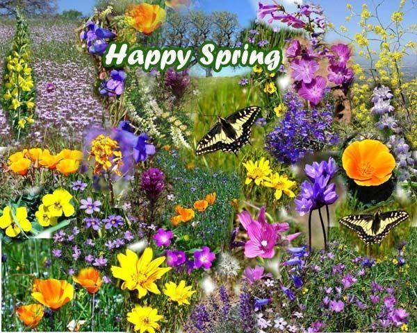 Die 47 besten Bilder zu Springtime auf Pinterest  Jahreszeiten