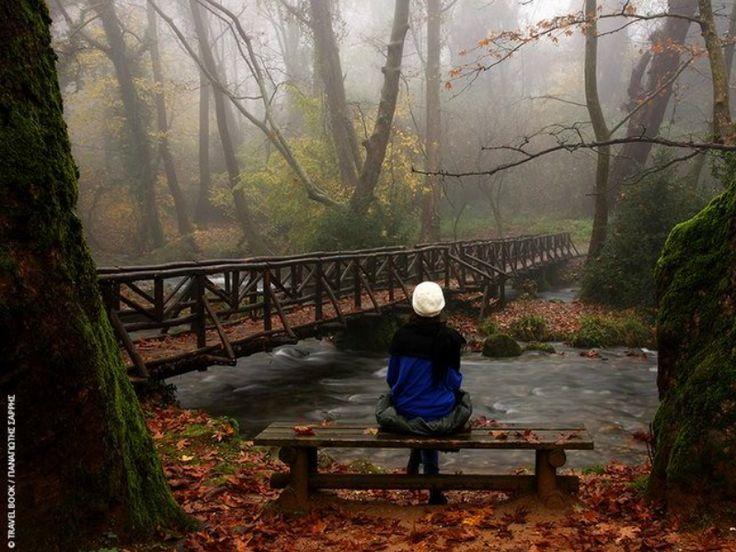 To παραδεισένιο δάσος με τα υπεραιωνόβια πλατάνια στην Ελλάδα που βραβεύτηκε ως το καλύτερο της Ευρώπης! (Photos)