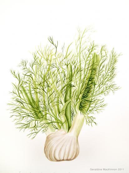 Geraldine MacKinnon | American Society of Botanical Artists