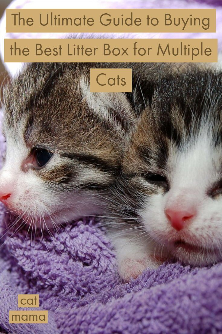 We All Want To Do What S Best For Our Kitties And We All Make Mistakes Along The Way Learn From These 5 Mo First Time Cat Owner Raising Kittens Cat Parenting