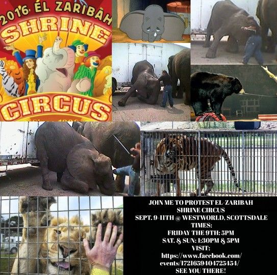 #Protest #ShrineCircus #Westworld #scottsdale #animalabuse