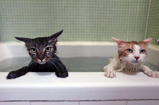 猫が風呂上がりにくっ付いてくる理由wwwwwwwwwwwwwwwwwwwwwwww