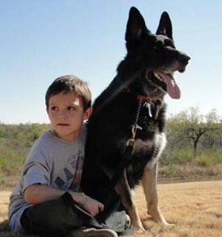Thank you PetWill pet parents for adopting Hank, a sweet retired Military dog. We honor our men and women in uniform, especially those with paws. #veteran #veterans #veteransday #friday #dog #germanshepherd #honor #military #militarydog #duty #callofduty #servicedog #petsarefamily #petwill #mypetwill #protectyourpets #dogsofinstagram
