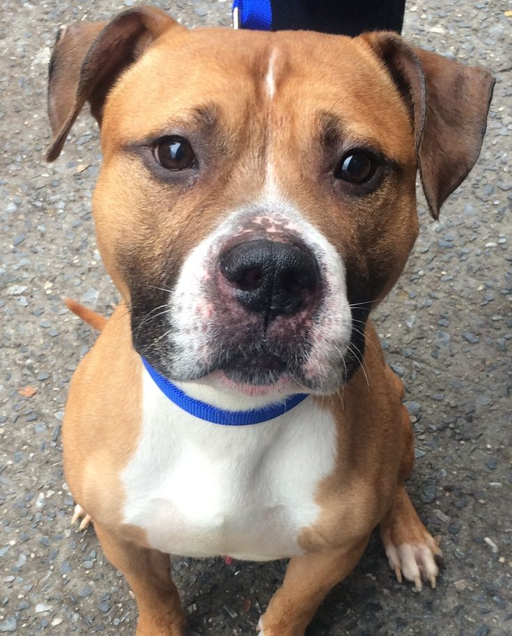 Adopt Rocky *URGT* IMMED FOSTER HOME NEEDED on Petfinder