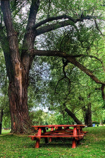 Picnic table under a shade tree.