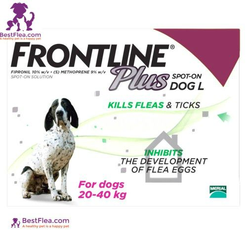 Buy Frontline Plus For Dogs - Large 45-88lbs (3 Pipettes) online at BestFlea. Shop now and get free USA delivery on all orders over $29.99. For more information visit: https://www.bestflea.com/frontline-plus-for-large-dogs-45-88lbs-3-pipettes.html