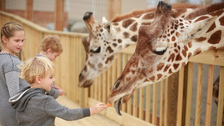 Tuesday Giraffe Cam (5/2/17)