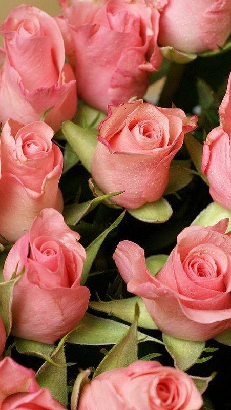Roses for Mom ♡♡♡