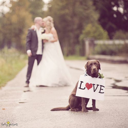 I wish Ruger would have been here for our wedding because he was supposed to be our ring bearer and we could have had a cute picture like this :-)!!
