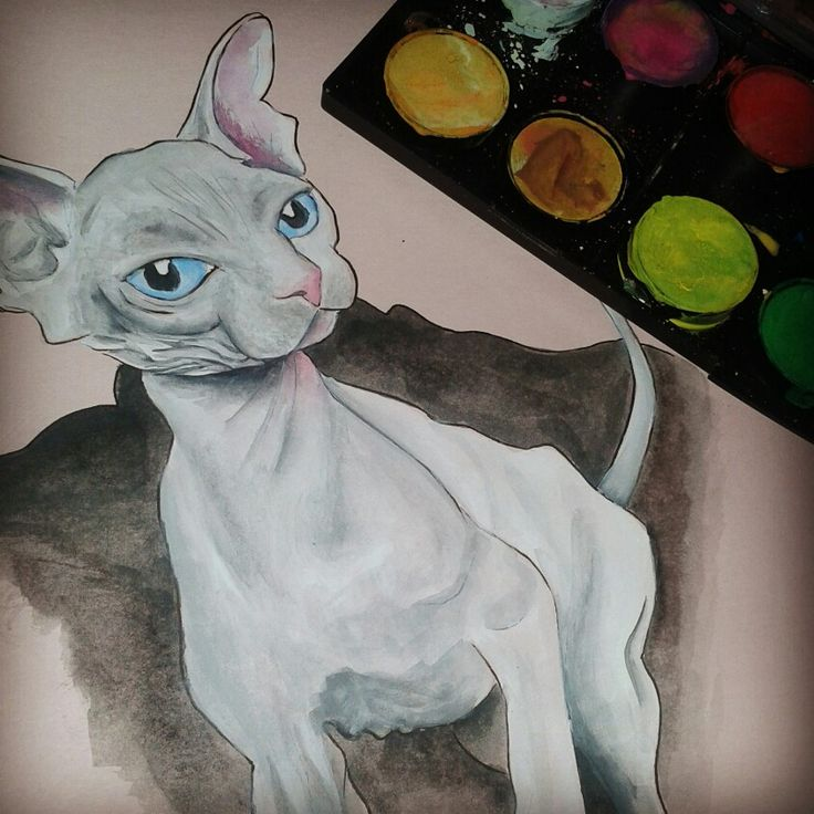Sketch of a sphynx cat, watercolour