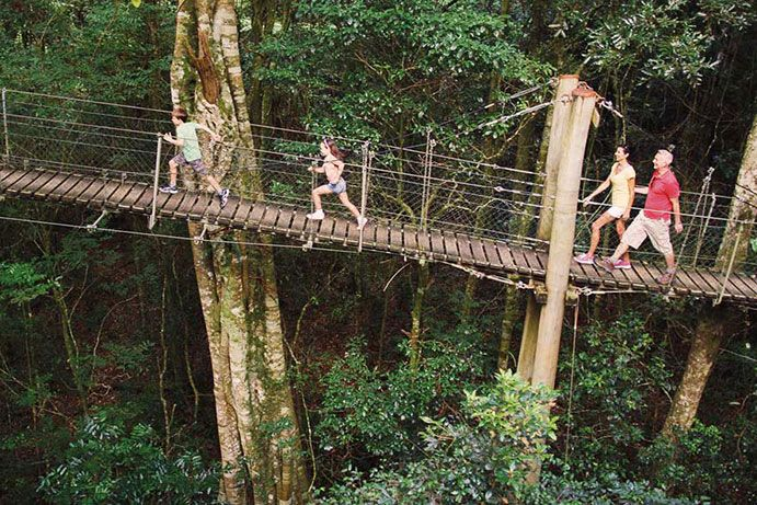 Tree top walk at O'Reilly's Rainforest Retreat  | Things to do on the Gold Coast with kids