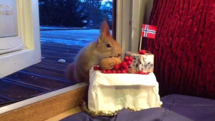 Siden i høst har flere ekorn spredd glede for Mona Wærum og familien på Setermoen. Derfor bestemte hun seg for å gi litt tilbake, og det endte opp med et aldri så lite julebord for et kontaktsøkende ekorn i bygda.