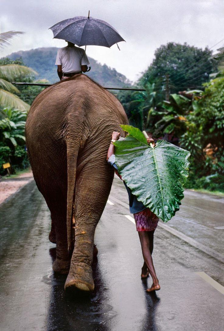 Me promener sur le dos d'un éléphant