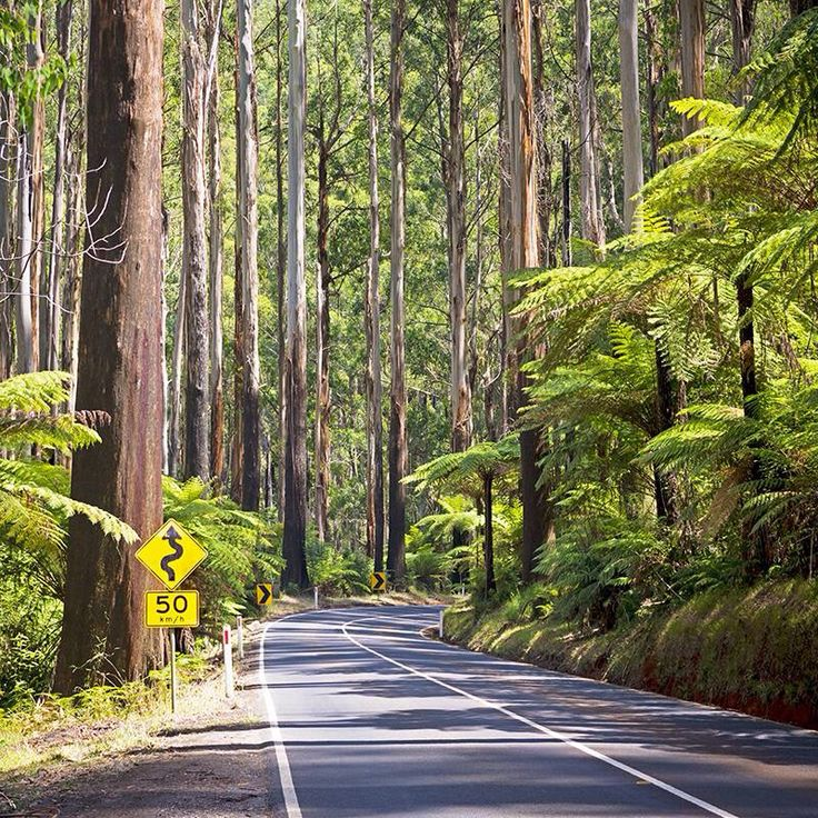 Road through The Yarra Ranges