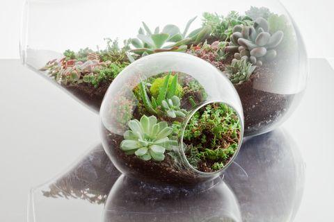 Simple modern terrarium.  Google Image Result for http://media.dwell.com/images/480*320/botany-factory-terrarium-armadillo.jpg