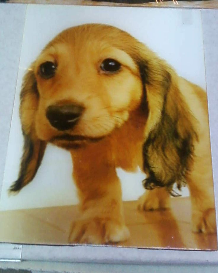 A photo of a dog not regular pic though because this one if you saw it in person would be 3D(no glasses required to see 3D look)