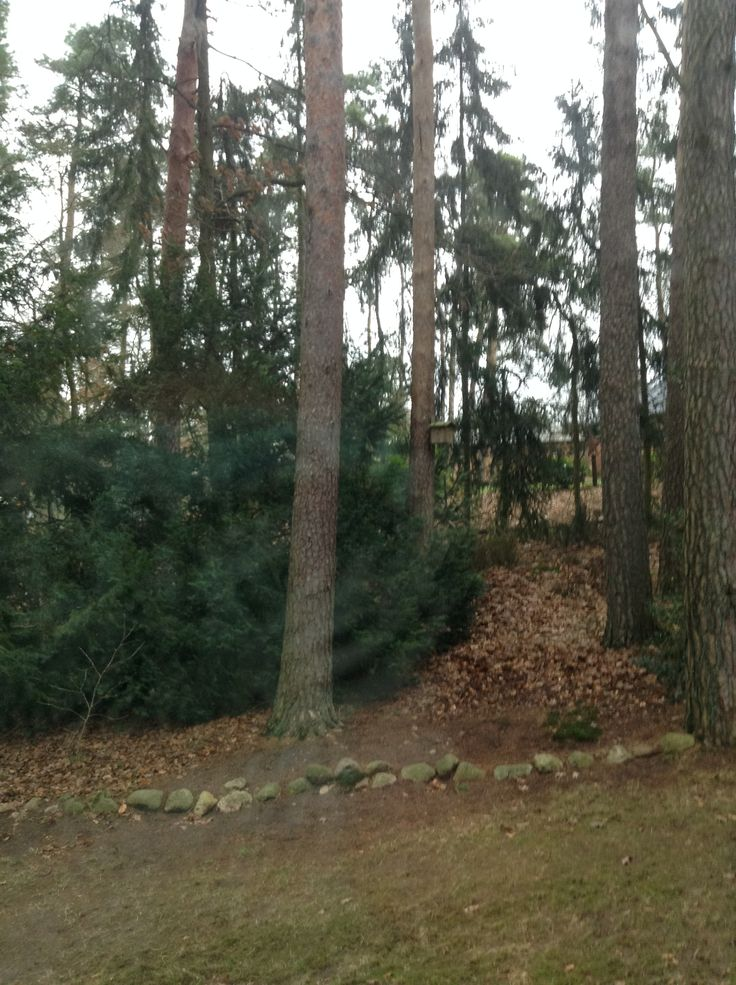 In the pine forests in Germany
