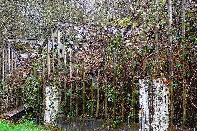 Vashon Island greenhouses
